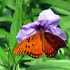 Cypress Gardens - Butterfly