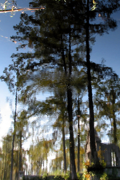 Cypress Gardens Reflection II