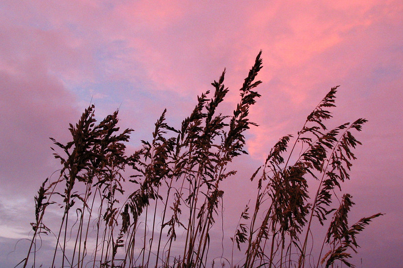 Sullivan's Island Sea Oats at Dusk