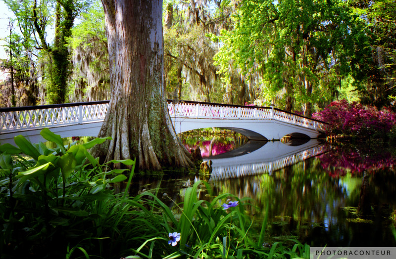 """Magnolia Bridge No. 2"" ~ One of seven bridges that grace the beautiful grounds and gardens of Magnolia Plantation in historic Charleston, South Carolina. The gardens were first opened to the public in the 1870s, but some sections of the gardens are more than three centuries old."