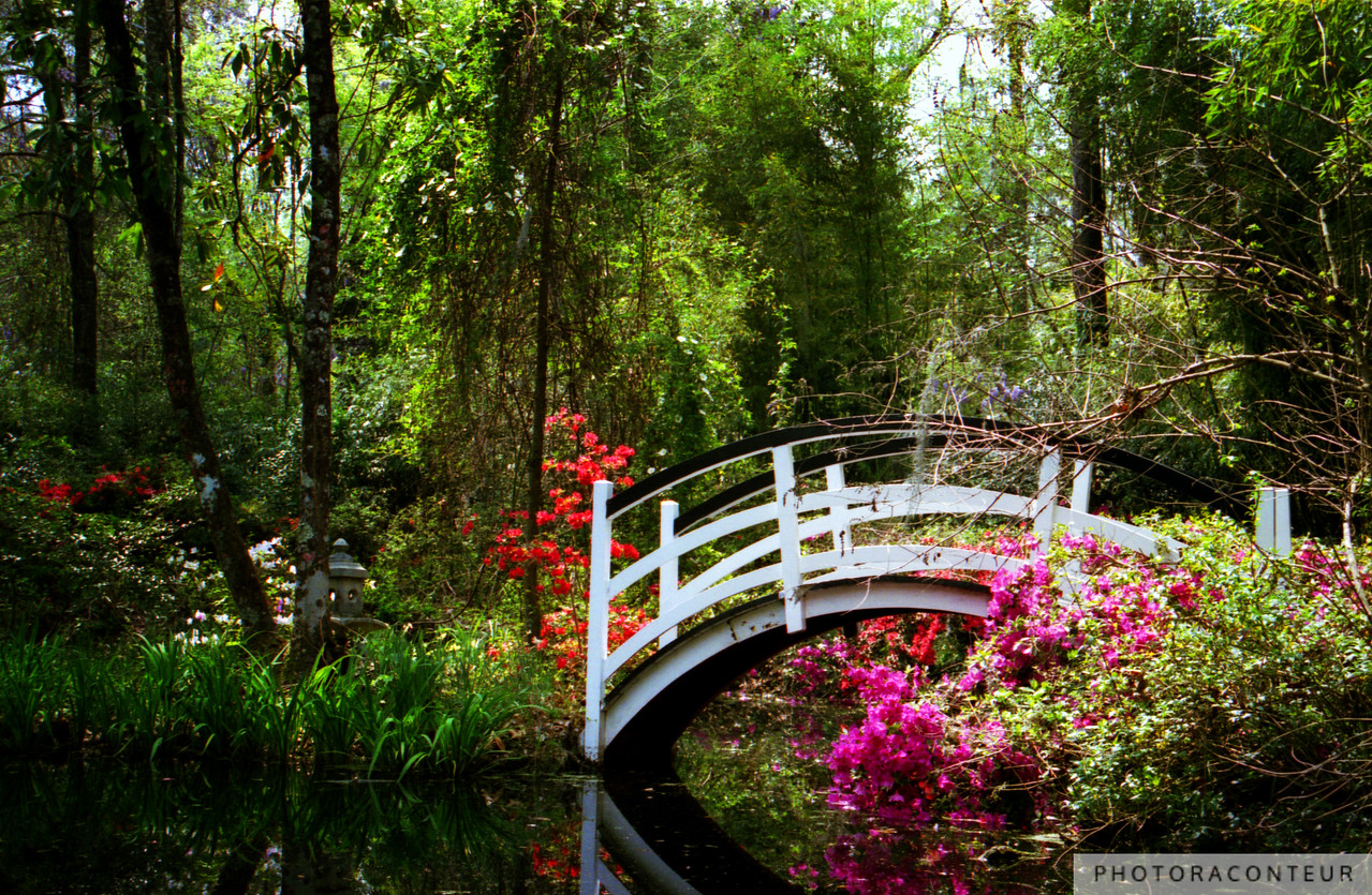 """Magnolia Bridge"" ~ After living in Charleston, South Carolina for seven years and visiting the historic Magnolia Plantation & Gardens many times, this is my favorite photo of one of the seven picturesque bridges located on the grounds.  The gardens were first opened to the public in the 1870s, but some sections of the gardens are more than three centuries old.  I took this photo one beautiful Spring day during the usually brief Azalea blooming season.  The best part about looking back at this photo, though, is that I no longer have to swat the mosquitoes and gnats!    NOW AVAILABLE: 16""x24"" MetalPrints in Limited Editions of 100. Click for more info:      HUGE PRINTS are also available for this photo! Get prints that are taller than you are, or wider than you can stretch your arms! Click for more info:"