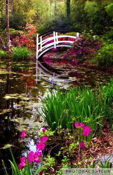 """Magnolia Bridge, Charleston, SC"" ~ Colorful photo of bridge within the grounds and gardens of the Magnolia Plantation in historic Charleston, SC."