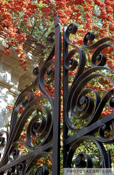 """Charleston Gate & Flora"" ~ Colorful photo of wrought iron gate and the flora behind it in historic Charleston, SC."
