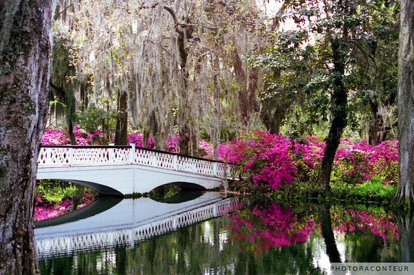 """Magnolia Bridge No. 4"" ~ One of seven bridges that grace the beautiful grounds and gardens of Magnolia Plantation in historic Charleston, South Carolina. The gardens were first opened to the public in the 1870s, but some sections of the gardens are more than three centuries old."