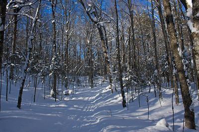Rock Lake Trail
