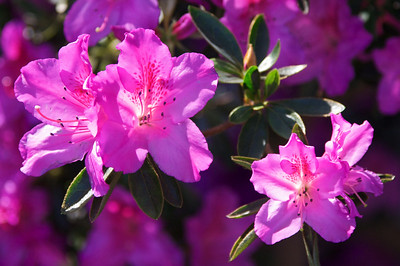 Flowers - Garfield Park Conservatory