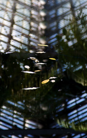 Reflecting pool - Garfield Park Conservatory