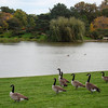 Chicago Botanic Garden 2