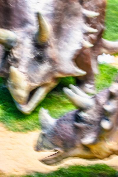 Tiny Triceratops Tells Mom