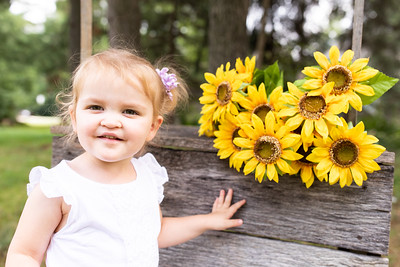 Sunflower-011