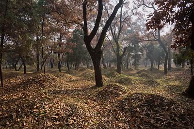 Kong lin (Kong Cemetery),  Qufu