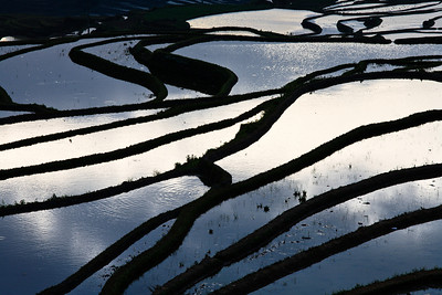 Rice Paddies Yuanyang Rice Terraces, Yunnan Province, China 稻田 元陽梯田,雲南省,中國