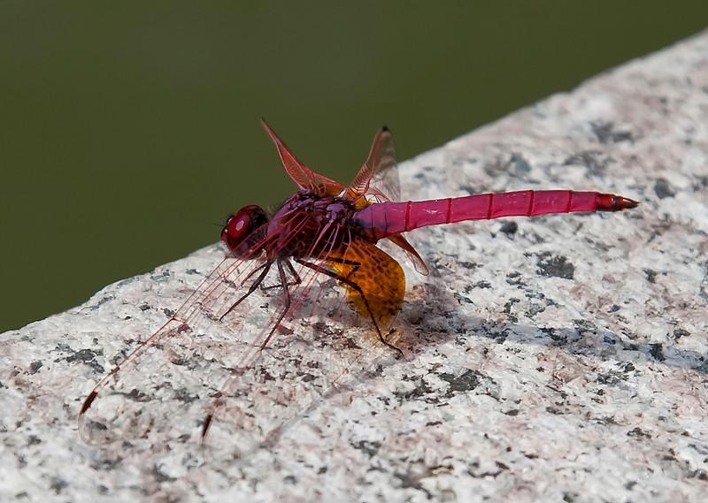 Dragonfly, Shanghai, China