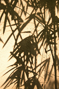 Abstract Bamboo Hong Kong, China. 竹 香港,中國