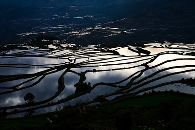 Morning Stroll Yuanyang Rice Terraces, Yunnan Province, China 早晨漫步 元陽梯田,雲南省,中國