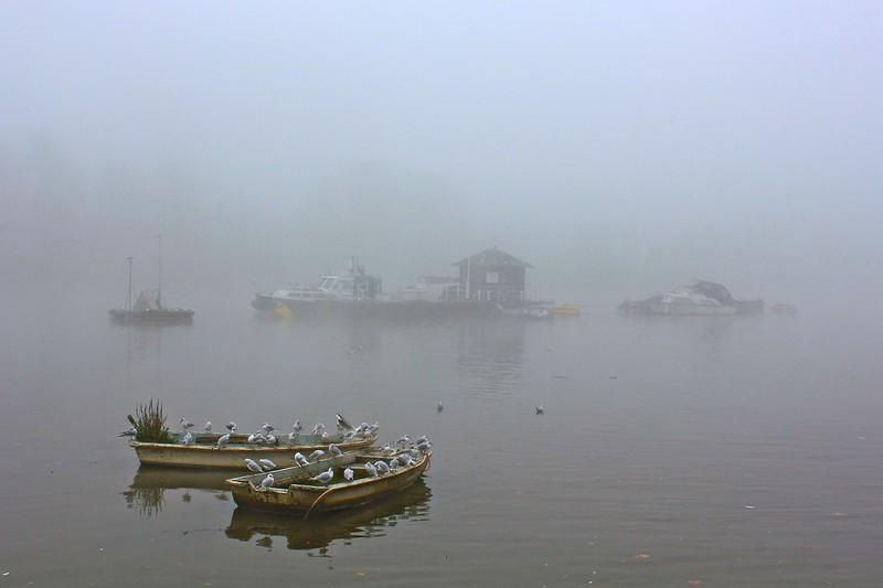 Fog Grounds Flights