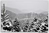 White Christmas-