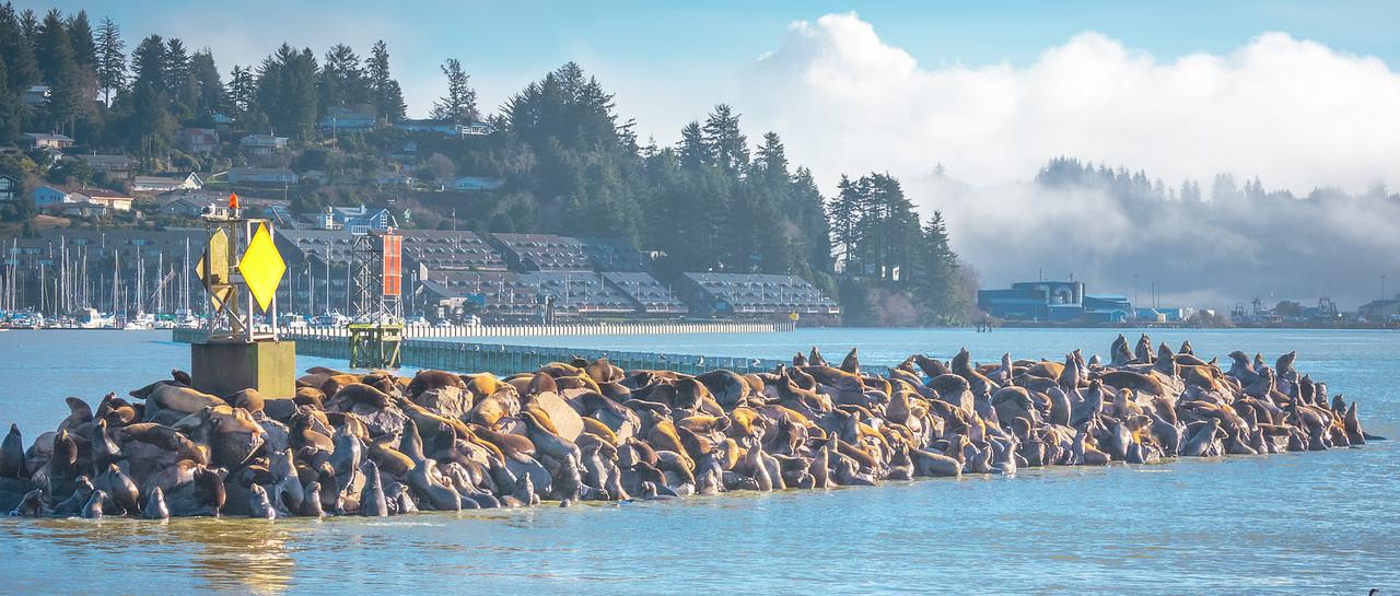 A mess of sun-bathing Sea Lions