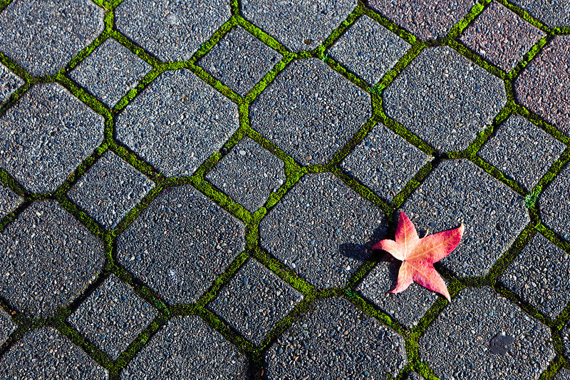 A Piece of Autumn