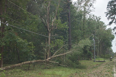 Tree Tangled in Power Line