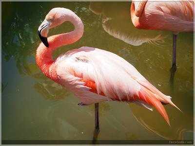 I can't resist a photo of a flamingo.