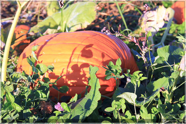The pumpkin patch had nice pickings.