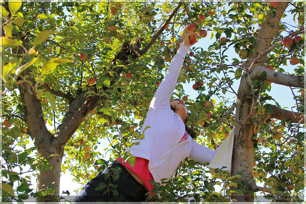 Reaching for those higher fruit.