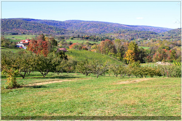 At the top of the hill there was a nice view of the orchard and surrounding farms.