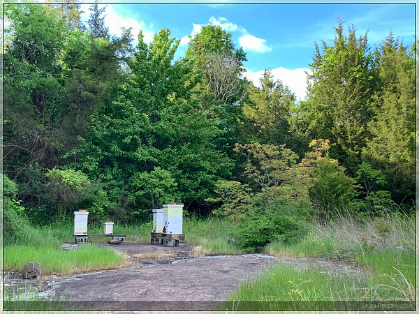 Beehives located near the trailhead