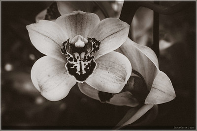 I'm always surprised when certain flowers look just as good in black-and-white as they do in color.