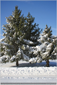 Did I mention I love the snow on trees? :)