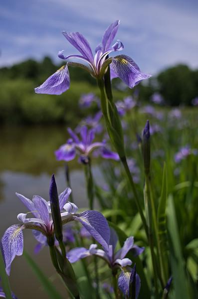 Iris world