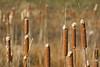 Reeds everywhere
