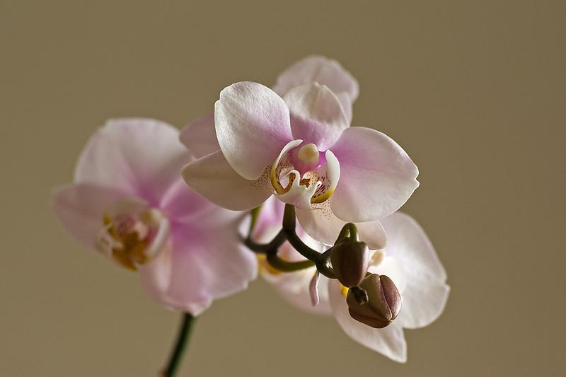 Flowering yet again