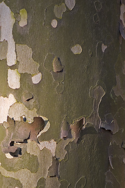 Color of a bark