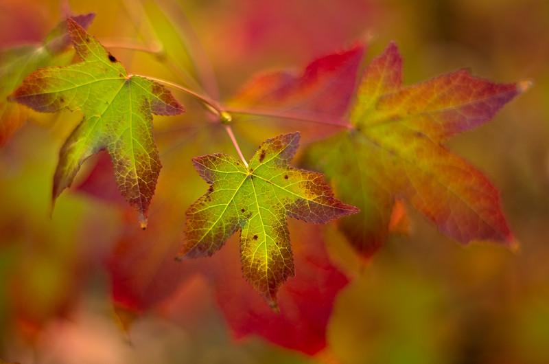 Autumn echoes