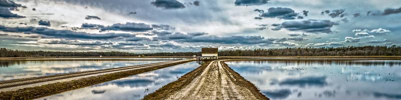 The Bogs After Harvest