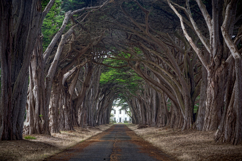 Tree Tunnel - Point Reyes, CA
