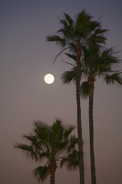 Palms and Moon - Newport Beach, California