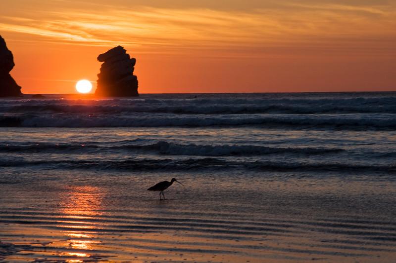CC114.  Shorebird at Morro Rock sunset.