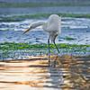 CC115.  Wildlife at Morro Bay.