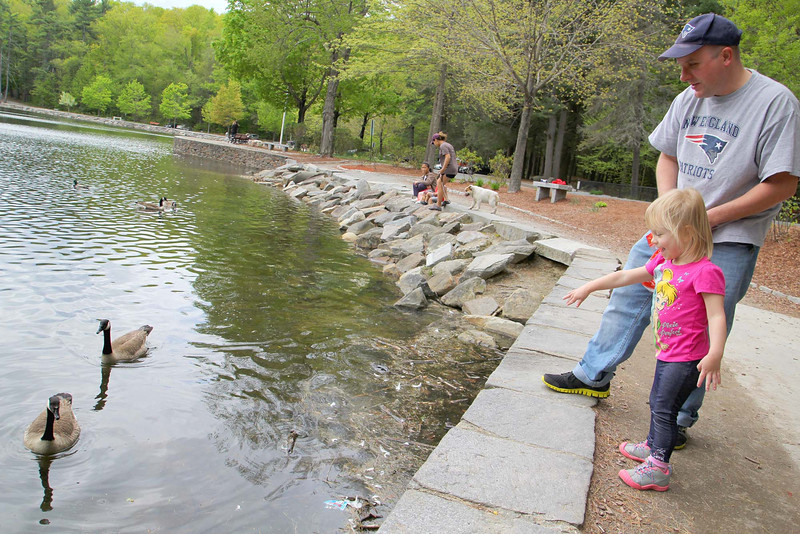 Grace Kneeland, 2, of Leominster enjoyed the nice weather and the geese with her dad Shawn at Coggshall pPark in Fitchburg on Monday morning. SENTINEL & ENTERPRISE/JOHN LOVE