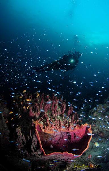 Ambon - Gladys glides over a reef pausing for a photo