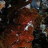 Anilao- Glady's spying on the frogfish