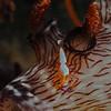 Jaruna and Imperial shrimp