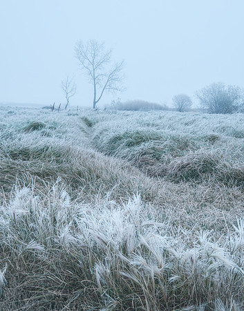 Frost and Mist