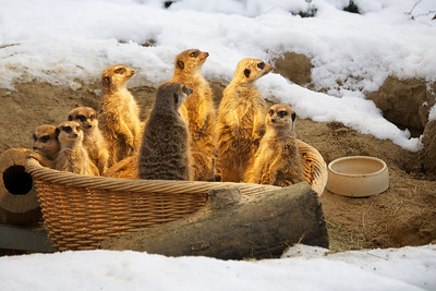 Cologne zoo in the snow