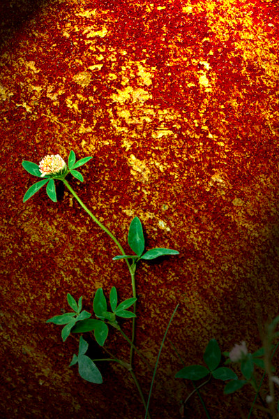 Rust & Flowers COLOR8