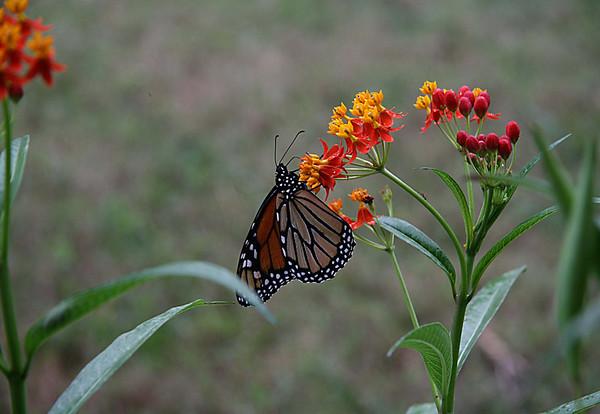 Nonie's Garden, Hawthorne, Florida