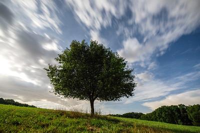 Moonlit Apple Tree